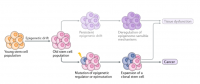 Epigenetic drift and cancer (adapted from Ermolaeva, M., Neri, F.,et al. Nature Reviews MCB, 2018.)